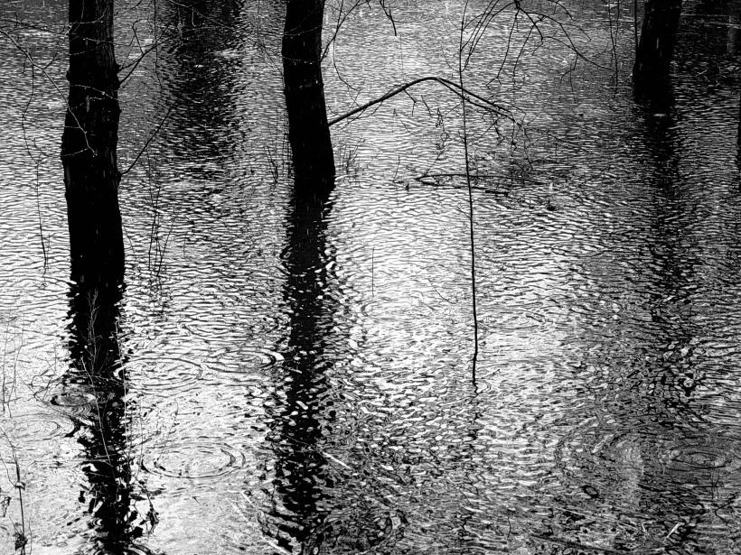 rain-178040_1920